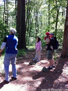 Stopping to look for the woodpecker...
