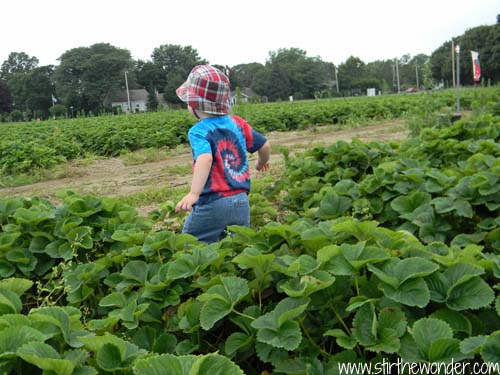 Field Trip: Strawberry Pickin'