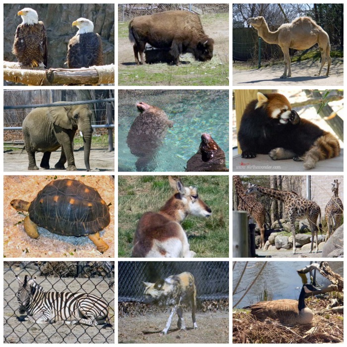 Animals of Roger Williams Park Zoo