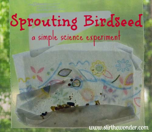 Sprouting Birdseed: a simple science experiment | Stir the Wonder #saturdayscience #preschool