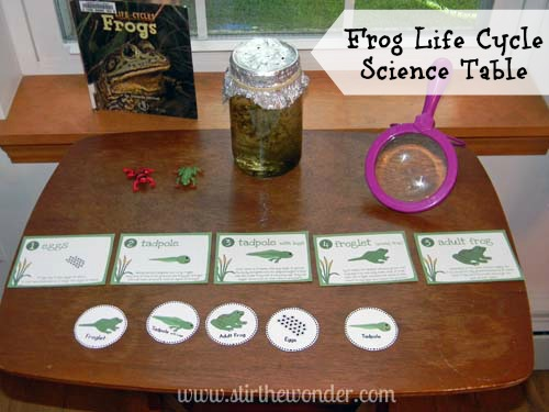 Frog Life Cycle Science Table 2