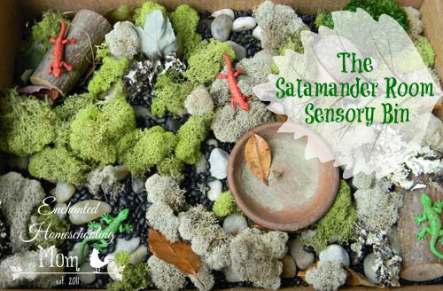The Salamander Room Sensory Bin - Enchanted Homeschooling Mom