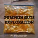 Pumpkin Guts Exploration