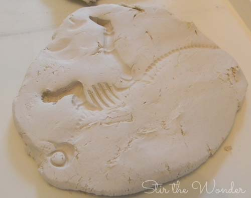 clay fossils3