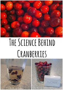 The Science Behind Cranberries | Stir the Wonder #science #preschool #thanksgiving