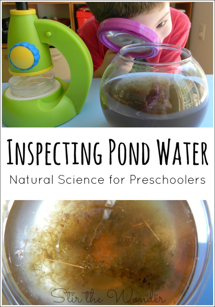 Inspecting Pond Water is a great Natural Science activity for Preschoolers.
