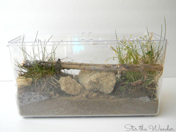 Mini ecosystem 1