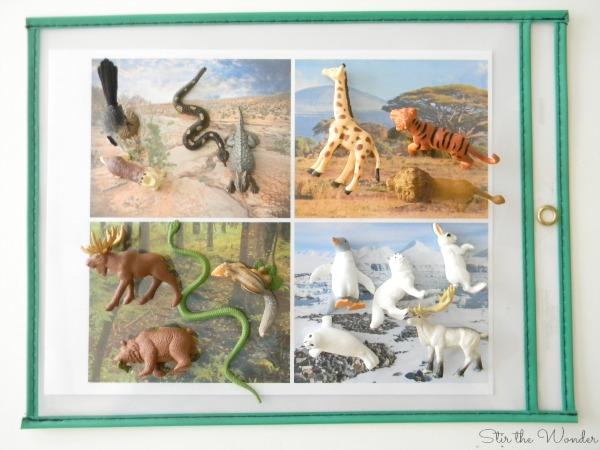 Animals & Habitats Camoflauge