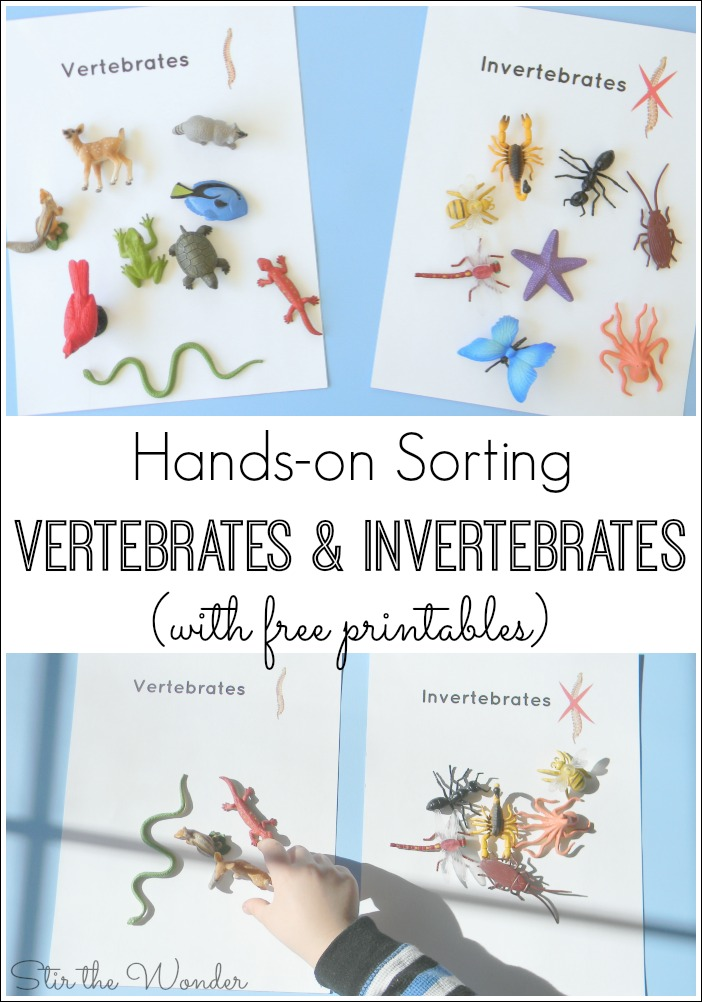 Kids will have fun sorting animals by vertebrates or invertebrates with this free printable!