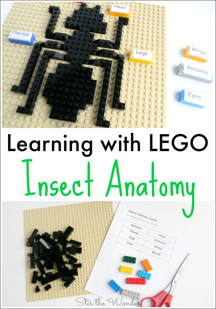 Learning with LEGO Insect Anatomy