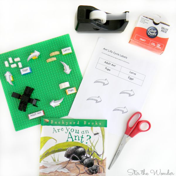 LEGO Ant Life Cycle supplies