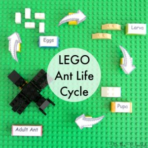LEGO Ant Life Cycle