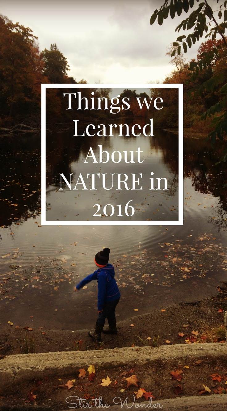 We learned so much about Nature in 2016 just by gettting outdoors to explore and play! Here is a list of what you can learn along with some great resources to add to your homes for nature studies!