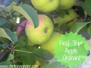 Apple Picking Southern Rhode Island