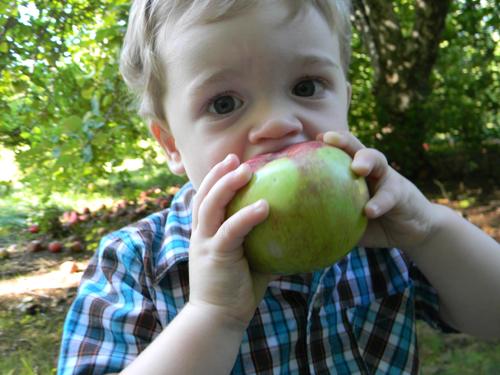 Field Trip!: Apple Orchard