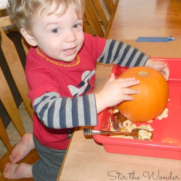Toddler exploring pumpkin