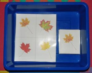 leaftray