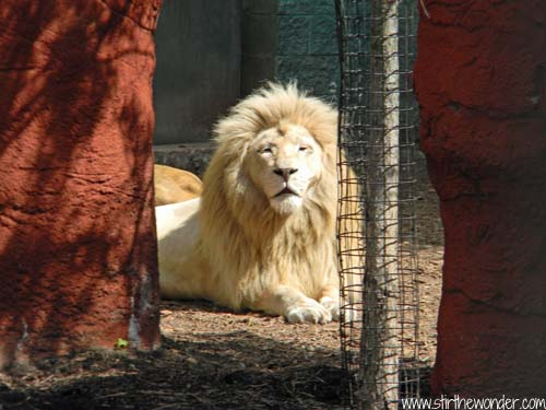 Exploring Capron Park Zoo