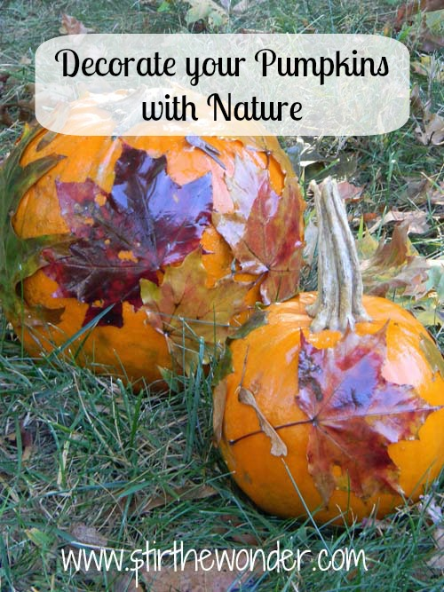 Decorate your Pumpkins with Nature- Stir the Wonder