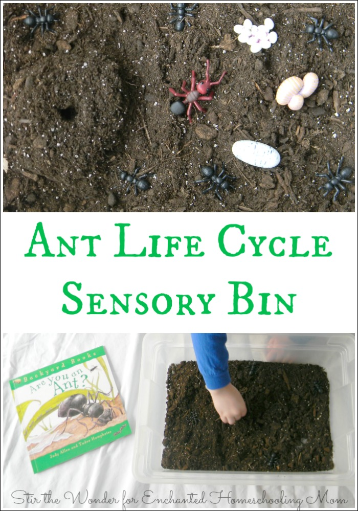 Ant Life Cycle Sensory Bin is a playful, hands-on way for kids to learn about the life cycle of ants!