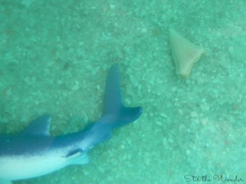 Shark Tooth Fossil Sensory Bin