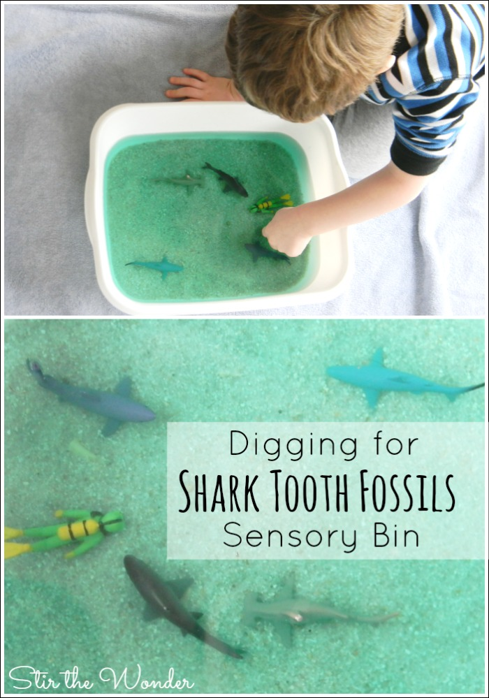 Digging for Shark Tooth Fossils Sensory Bin