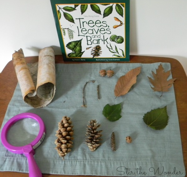 Trees, Leaves and Bark Nature Table