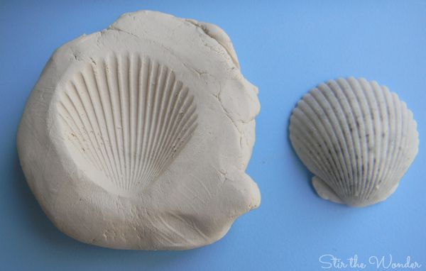 Shell imprint on Clay