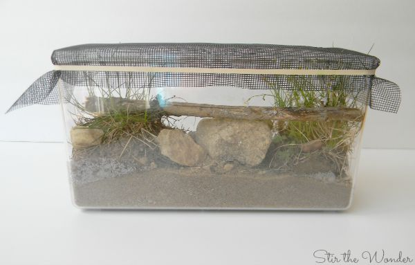 Mini Ecosystem for Nature Observation with Kids
