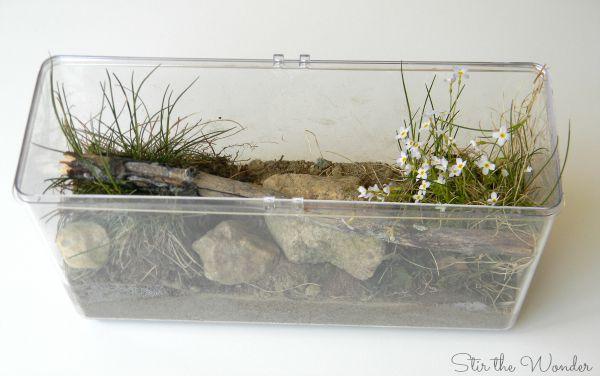 mini ecosystem 4