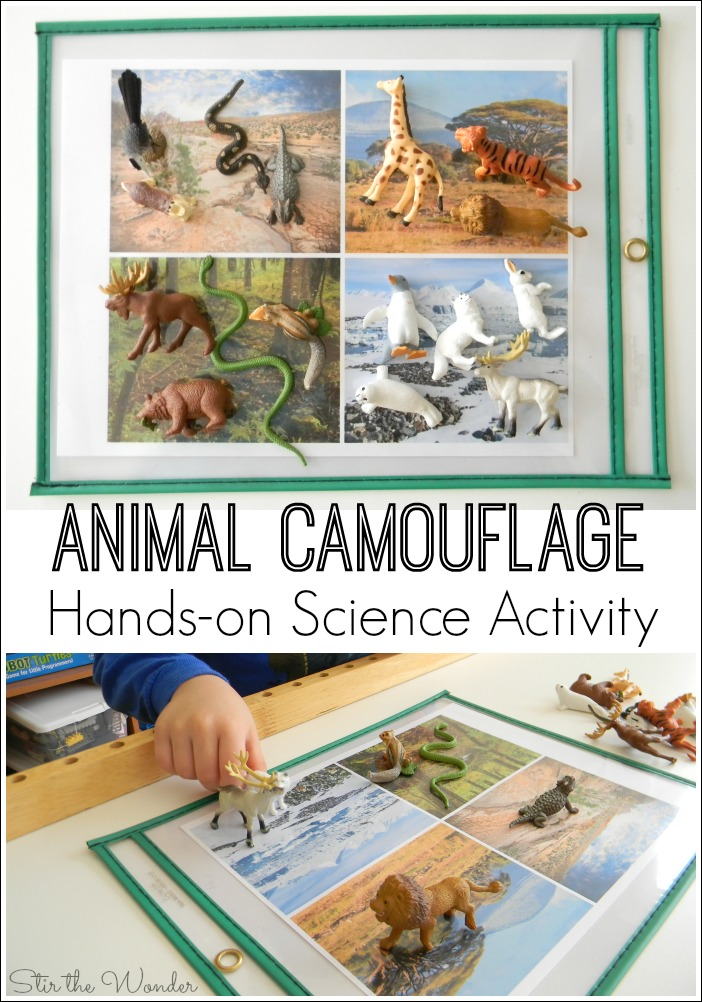 Animal Camouflage Hands-on Science Activity
