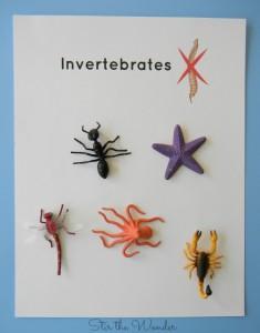 Invertebrates Printable Page