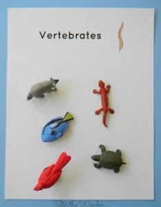vertebrates page