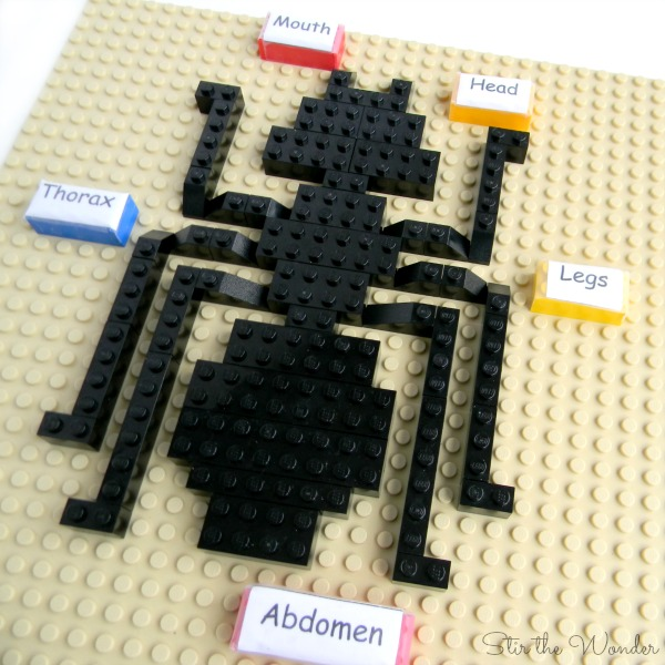 LEGO Insect Anatomy with labels