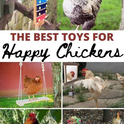 The Best Toys for Happy Chickens
